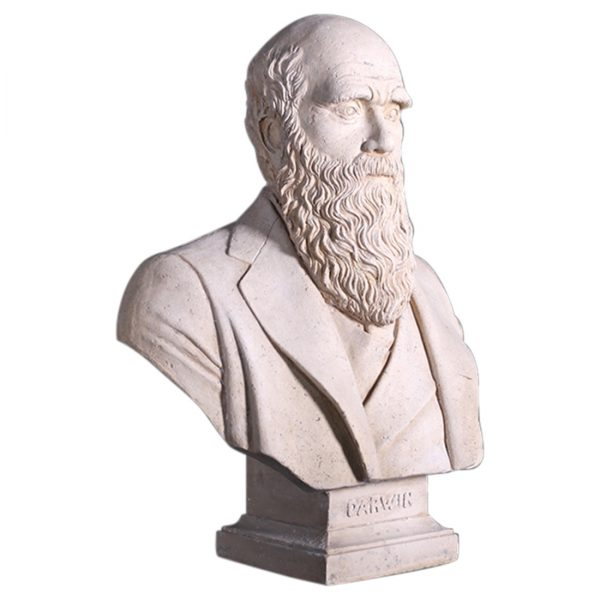 Bust of Darwin Made of Faux Stone w Marble Finish, Vintage Look, Statue or Sculpture