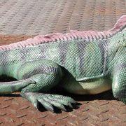 IGUANA Lizard Sculpture Statue, Amphibian, Reptile, Zoo, Museum Decor