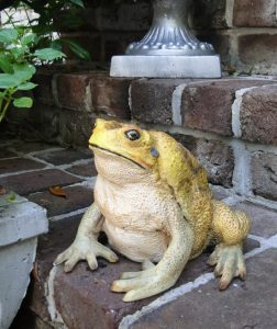 Cute CANE TOAD Figure Statue for Garden Home Decor or Zoo, Frog FUN
