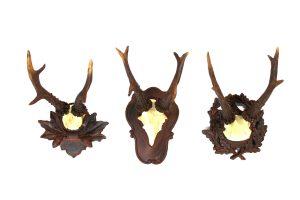Diminutive Set of Three Wall Mount Black Forest Roe Deer Antlers