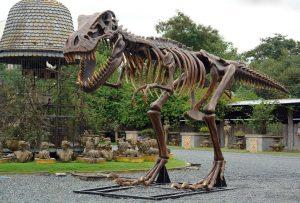 T Rex LIFESIZE Dinosaur Bones Skeleton sculpture museum mini golf marketing