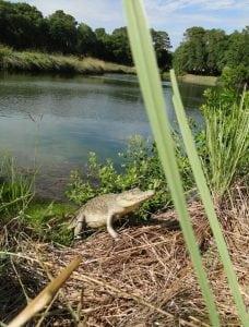 4′ Long Crocodile Alligator Sculpture Graden Staue Life Size