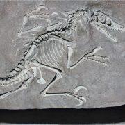 Dinosaur Sand Box Future Archaeologist Bones to Dig Jurassic Park