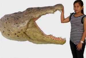 Big Taxidermy Crocodile Alligator Wall Bust Head Swamp People -The Kings Bay