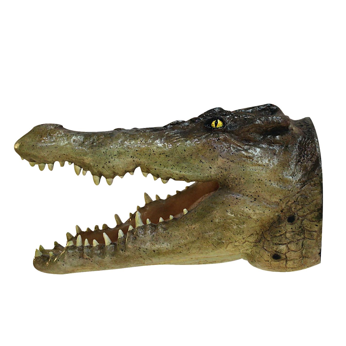 Crocodile Wall Mount Head Life Size 19 Alligator Reptile Sale The Kings Bay